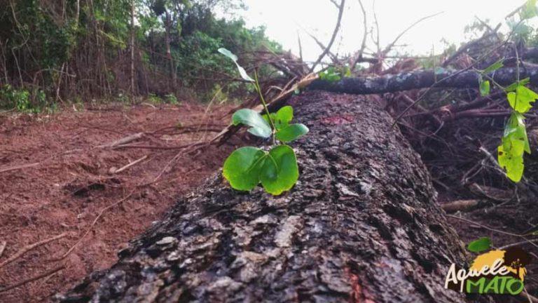 O sacrifício de 1.222 árvores salvando 300m do seu trajeto.