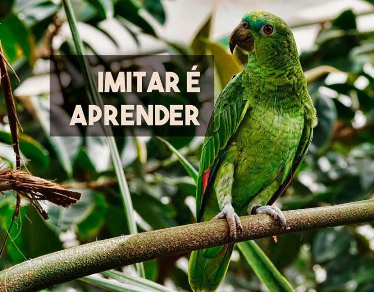 Você sabe por que os papagaios falam?