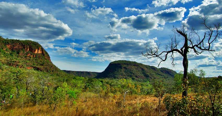 Cerrado Brasileiro