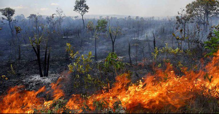 Desmatamento do cerrado ameaça nosso bioma