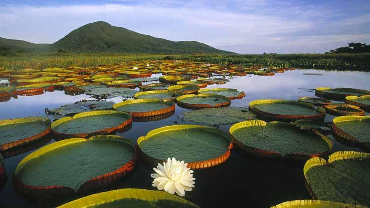 Conheça a história das águas do pantanal