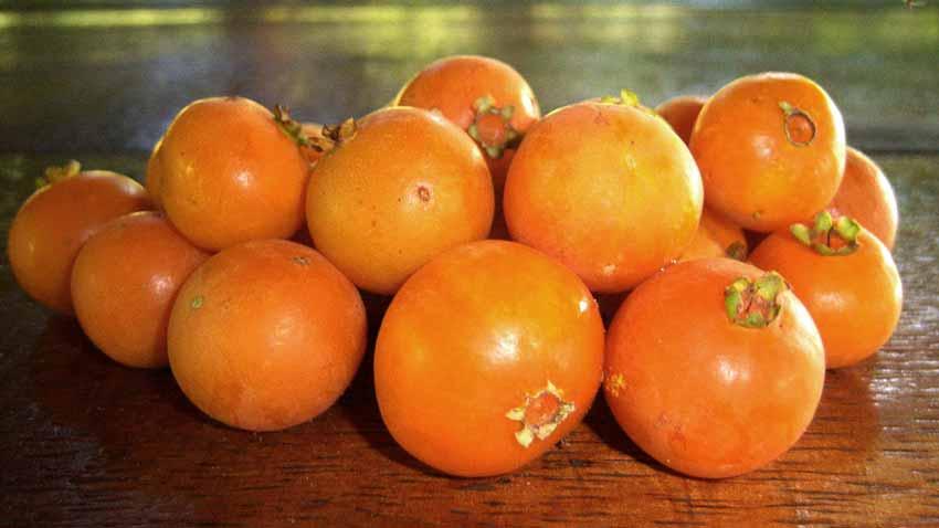 Fruto do cerrado