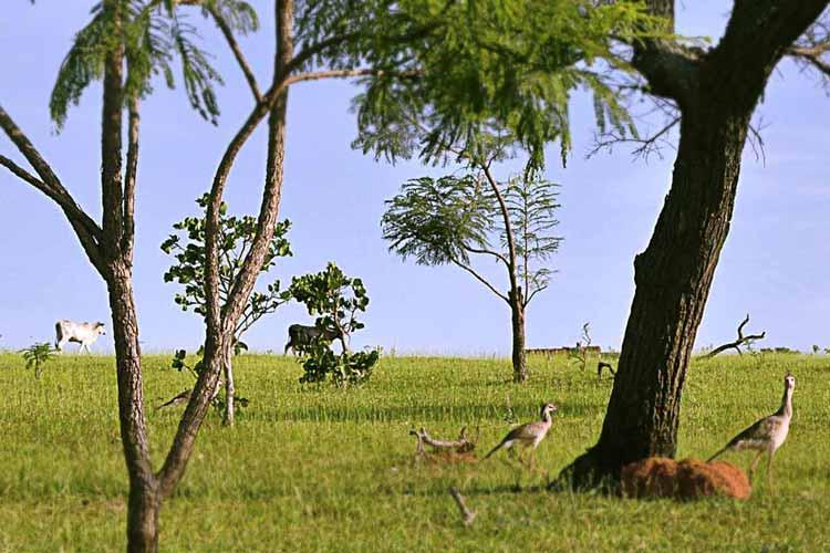É preciso ser tropófila para sobreviver ao bioma Cerrado