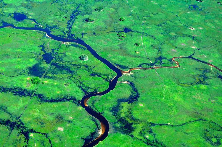 Pantanal, o bioma das águas que nem brasileiro conhece direito