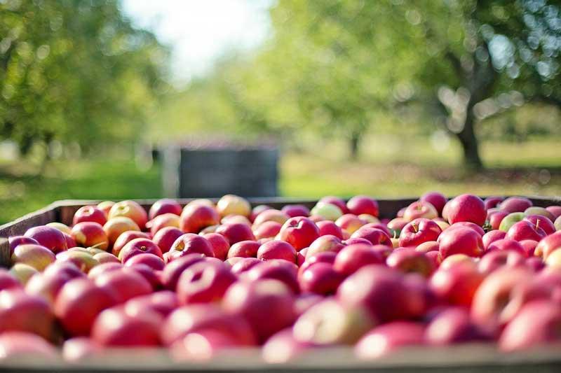 Projeto de lei prejudica pequeno produtor ao restringir venda direta de orgânicos