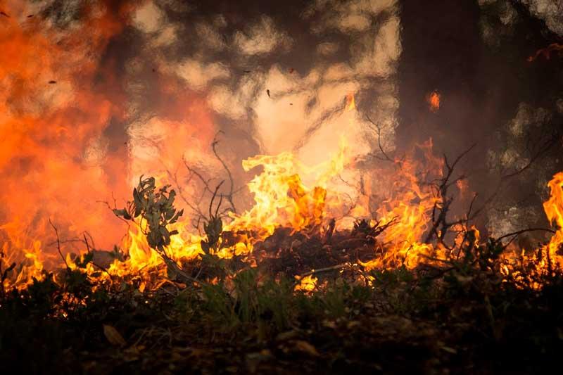 Em MS, queima de fogos de artifício se estendeu para a vegetação