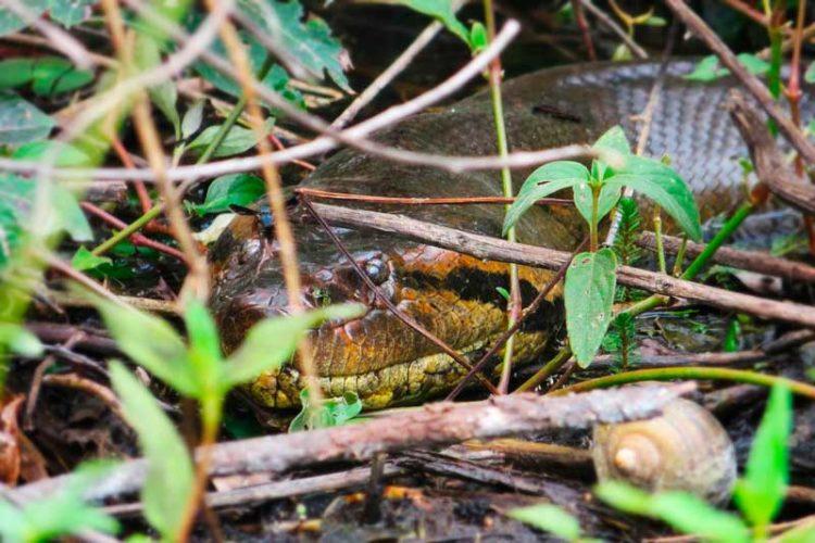 Pesca no Pantanal e o susto da sucuri