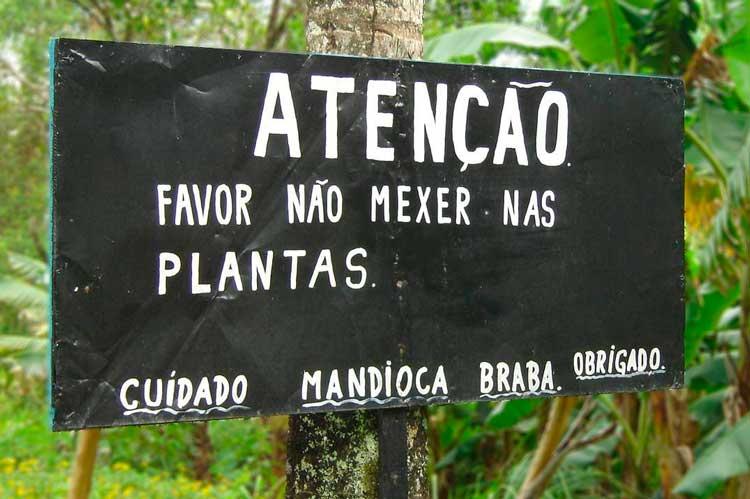 Mandioca – o amarelo da gastronomia de Mato Grosso do Sul