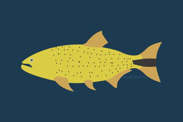 Peixes do Pantanal