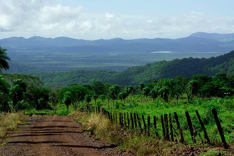 Biodiversidade na região