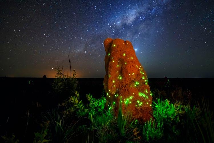 bioluminescência das larvas