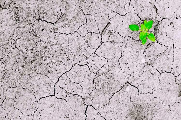 degradação do solo monocultura