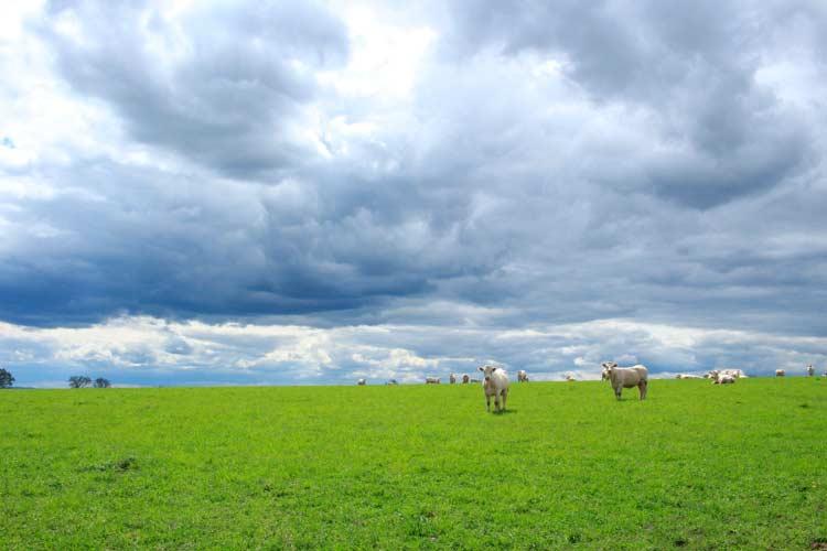 Pasto sem floresta