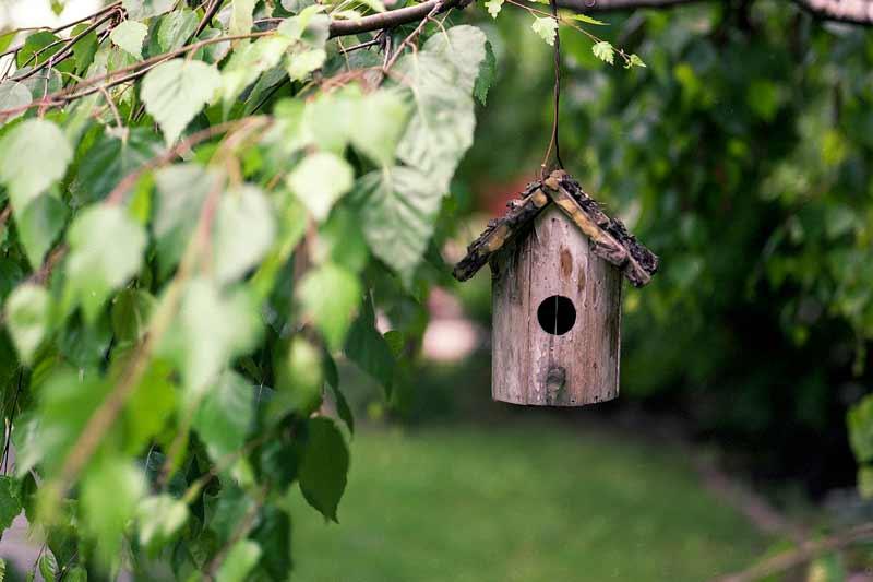 Dicas para atrair pássaros para sua casa