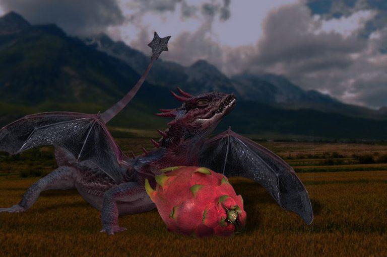 É época de pitaia, a fruta do dragão