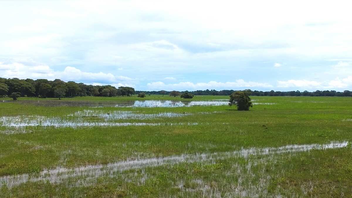 Voo de drone Pantanal