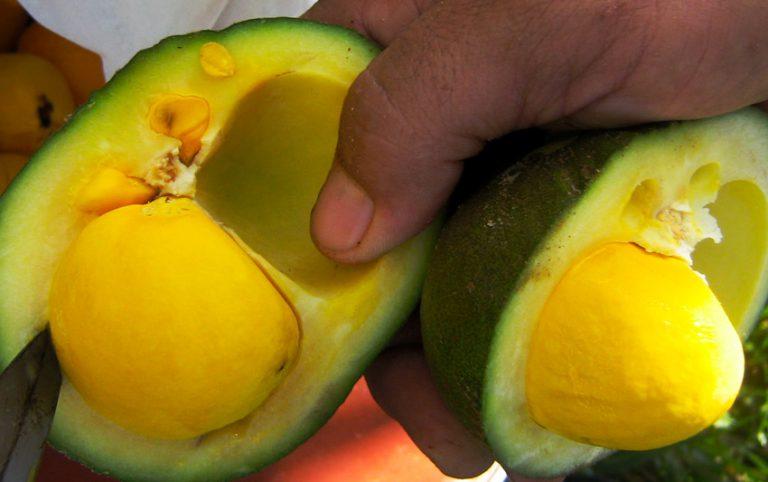 Não encontramos frutos do Cerrado nos supermercados