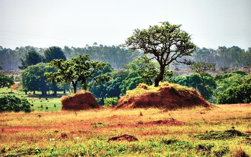 Desmatamento do Cerrado é preocupação em Londres