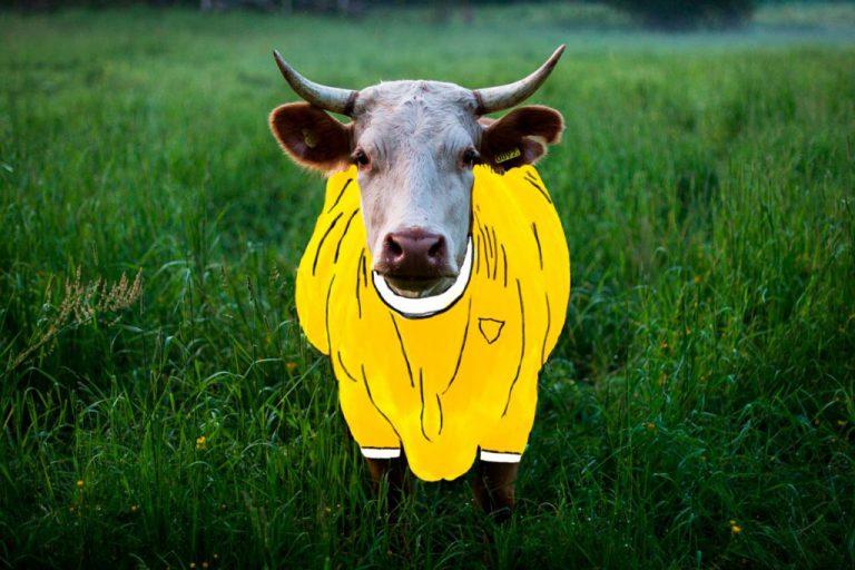 Mato Grosso do Sul tem mais gado que gente