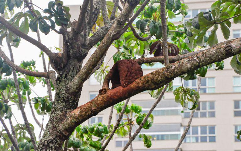 Arborização urbana – estratégia para regular a temperatura