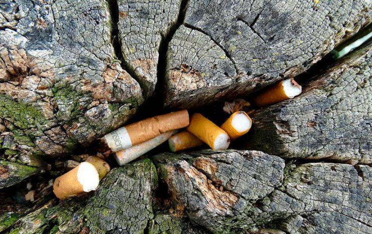Vermicompostagem para transformar cigarro em adubo