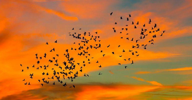 Pantanal – destino para aves migratórias