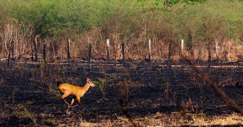 Pantanal – Nossa casa está em chamas