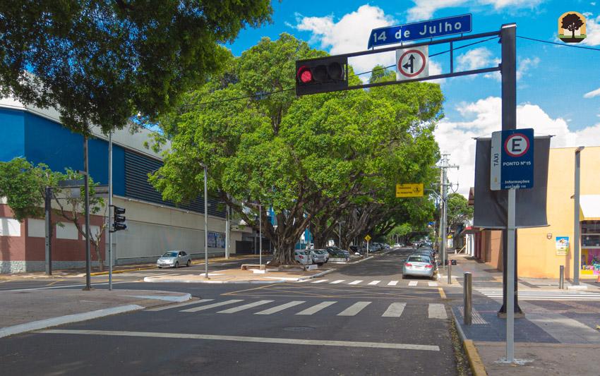 Árvores centenárias - Av. Mato Grosso