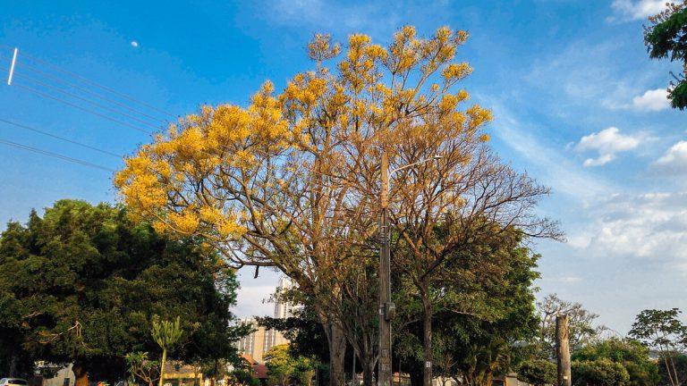 Árvores que florescem na primavera
