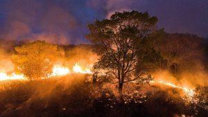 Pantanal em chamas – tvfolha