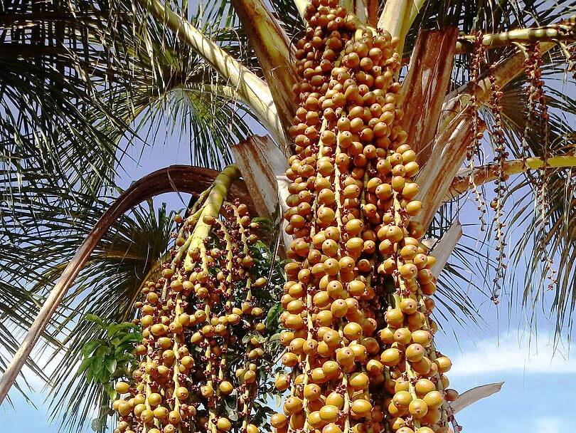 Plantas Típicas do Cerrado
