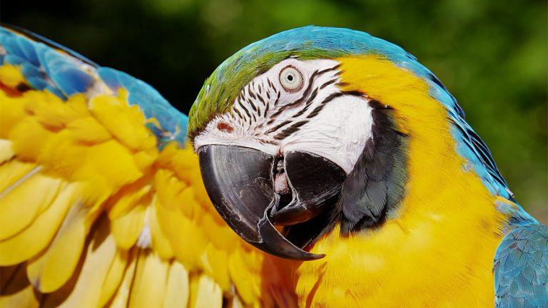Hoje é dia de observação de aves no Parque das Nações